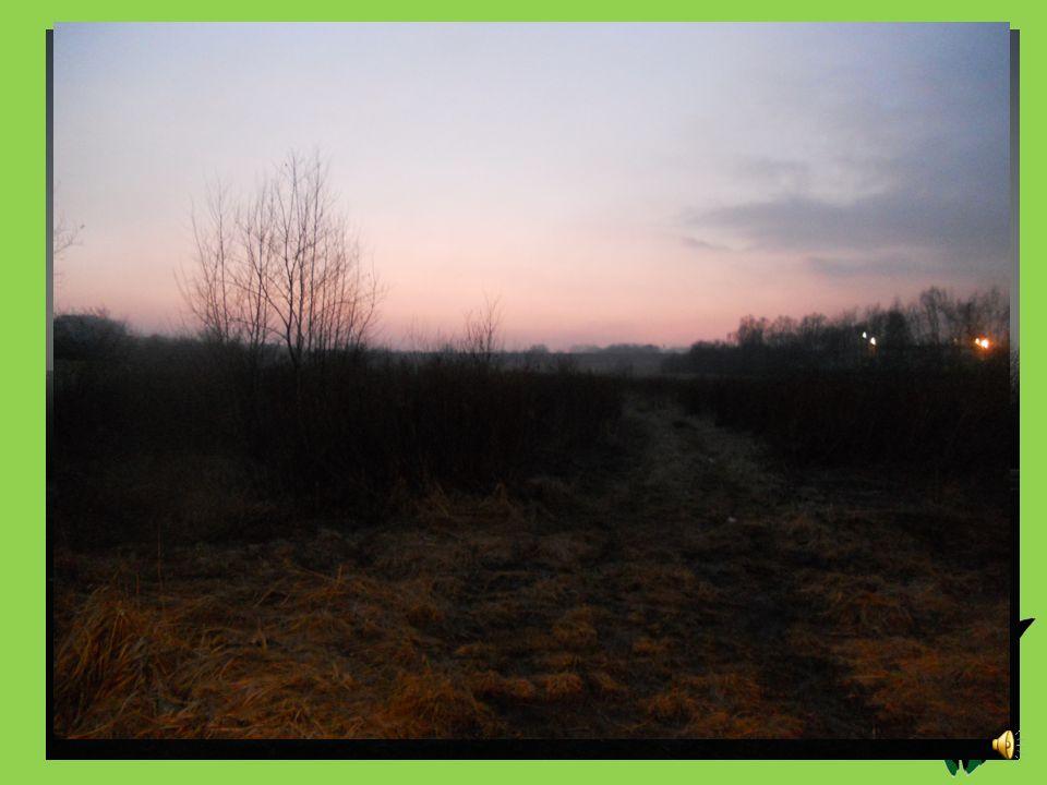 Dzień trzeci. 15.03.2012 Godzina: 7.00 Temperatura [oC]: 0 Ciśnienie [hPa]: 1015,25 Stan pogody: Słońce, mgła Wiatr [km/s]: 12,5  Opady: ----
